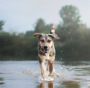 собак собака woofit пес
